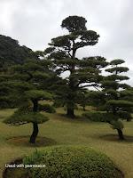Cloud-pruned pines, Sengan-en Garden, Kagoshima, Japan