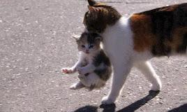 Kenapa Induk Kucing Menggigit Anaknya? Ternyata Ini Jawabannya!