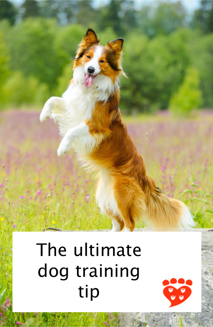 The Ultimate Dog Training Tip