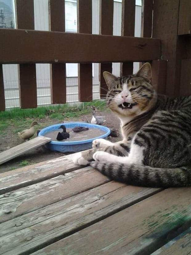 Funny cats - part 201, funny cat photos, best cute cat picture, adorable cat pic