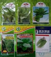 sayuran sawi, pak choy white takii seed, pak coy, jual benih sawi, toko pertanian, toko online