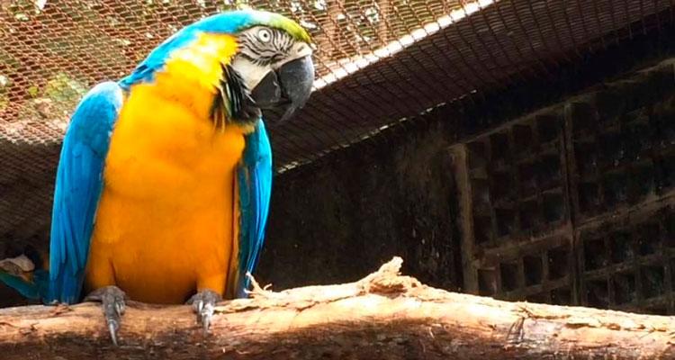 CPRH repatria araras e tucanos para o Amapá
