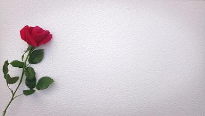 rose gold wallpaper roses wallpaper rose flower wallpaper
