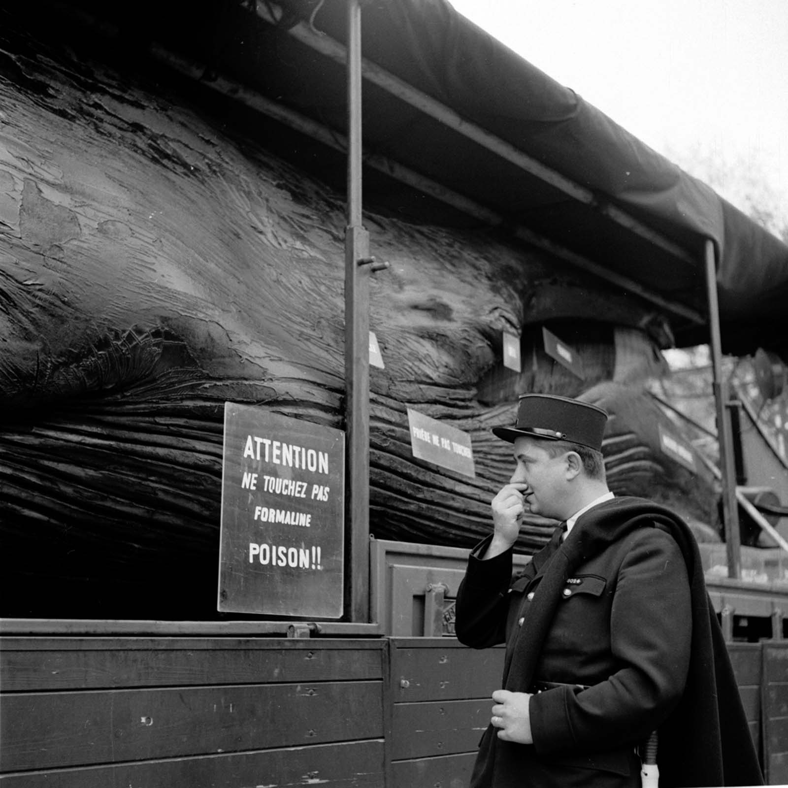 A police officer holds his nose while reading a warning against touching the formaline-full whale.