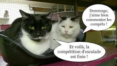 Jeppeto et Cardamone.
