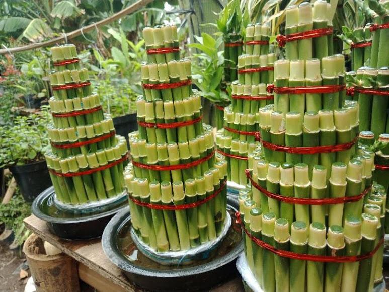 Bambu Hoki 5 susun pagoda susun 5 Sungai Penuh
