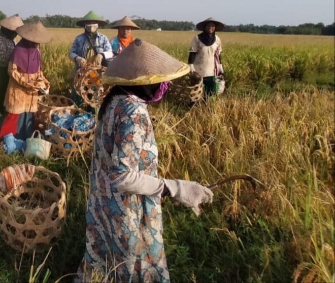 Petani Sebut Kepedulian Pemerintah di Sektor Pertanian Jauh Lebih Unggul Pada Era Soeharto