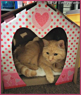 Carmine lays in his Valentine's Day cat house scratcher.