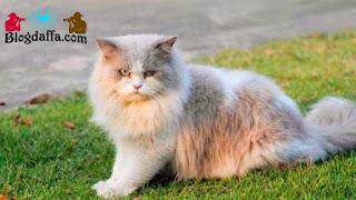 Kucing Dipercaya dapat Membawa Keberuntungan