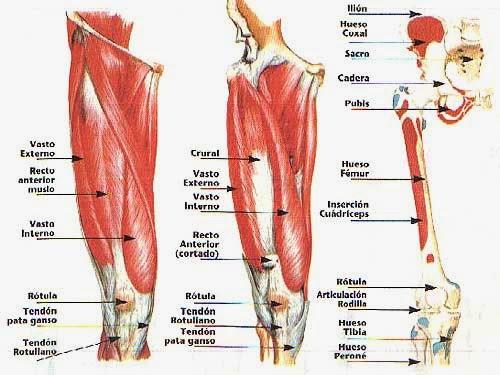 fortalecimiento de los músculos de las piernas dolor de rodilla