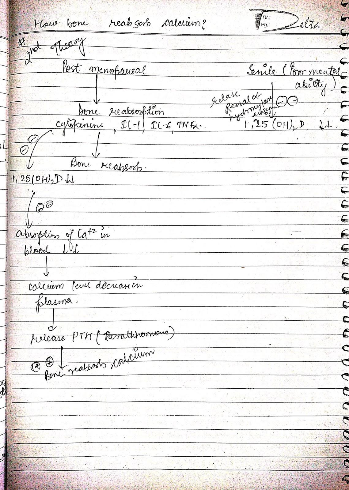 pathophysiology - jaundice