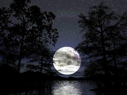 O fascínio da Lua... Lua Cheia iluminando a floresta escura