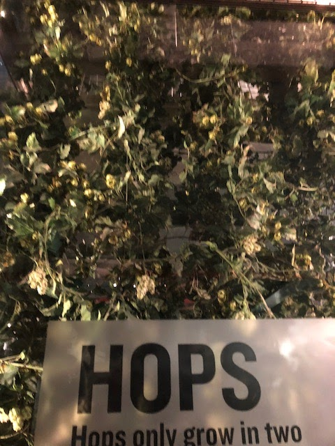 Guinness Brewery tour hops