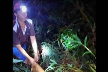 Seorang Warga Palembang Tewas Mengenaskan Di Terkam Harimau
