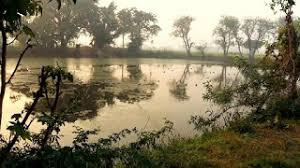 समन पक्षी अभयारण्य मैनपुरी उत्तर प्रदेश