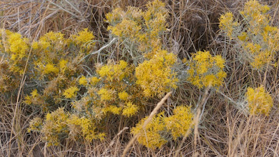 Eagle Butte, Cypress Hills, Alberta, plant, landscape