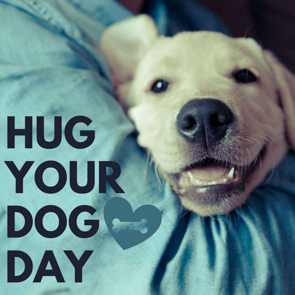 National Hug Your Dog Day Wishes Awesome Picture