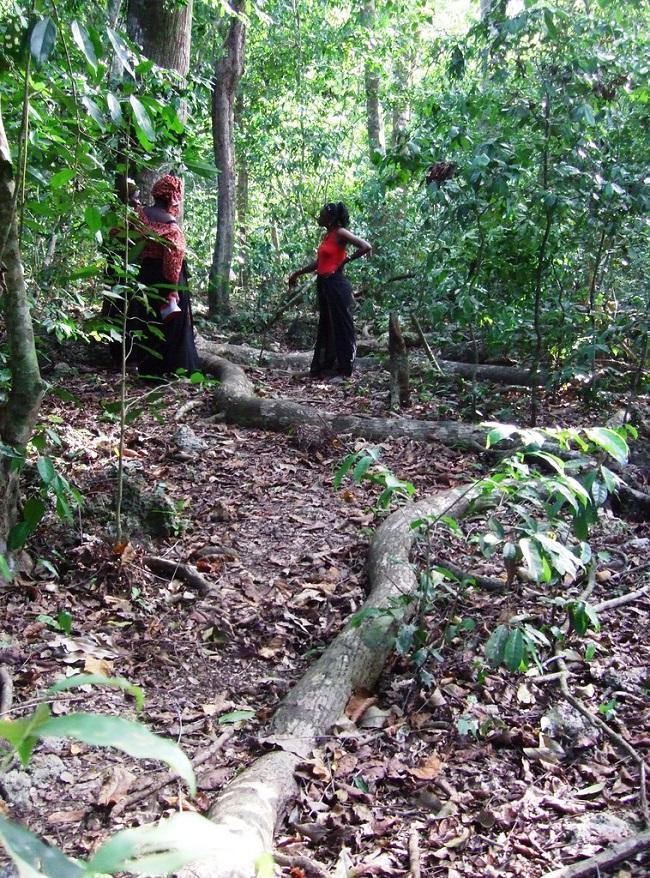 Mijikenda Kaya Forest (Victor Ochieng from London, UK in 2008 - under a CC0C 2.0 license)
