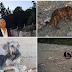 ΚΟΛΑΣΤΗΡΙΟ ζώων η χωματερή στο Λουτράκι