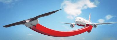 aircraft and bird strikes reasons