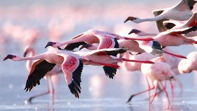 خلفيات طيور رائعة