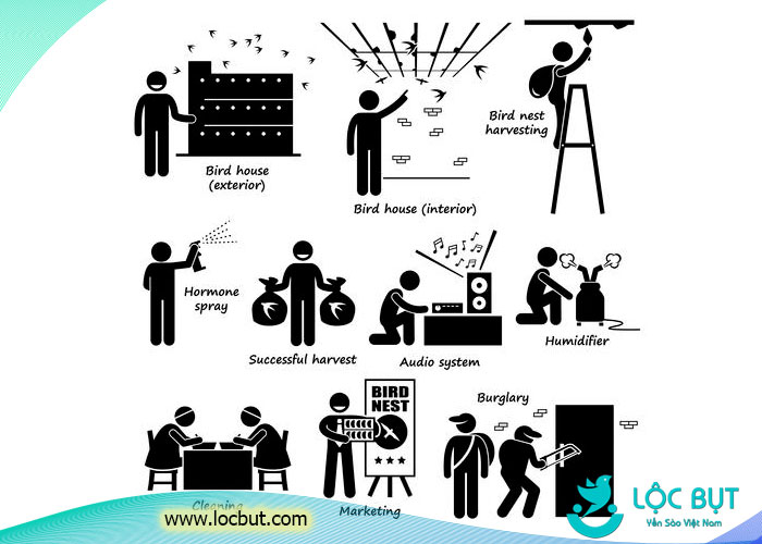 Tóm tắt qui trình xây dựng, chăm sóc, quản lý và thương mại hóa yến sào trong một trang giấy.