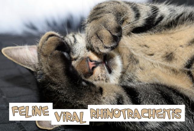 Virus Rhino