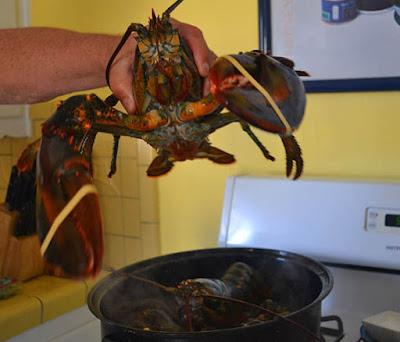 Cara Membersihkan Lobster Air Tawar