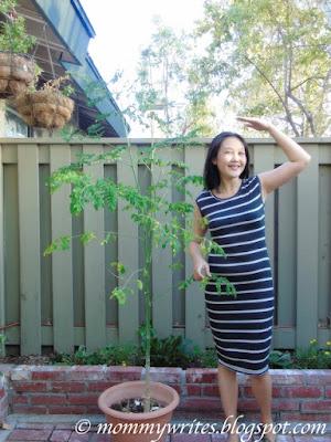Can You Grow Malunggay / Moringa in a Pot? Yes You Can!