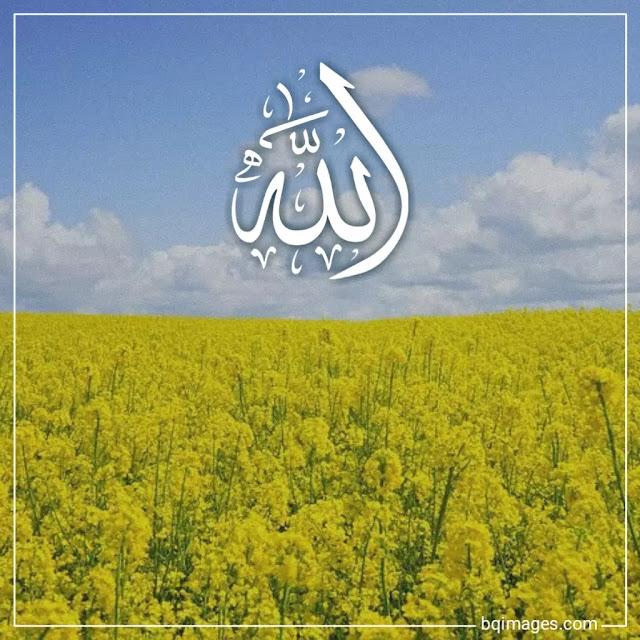 Allah images dp