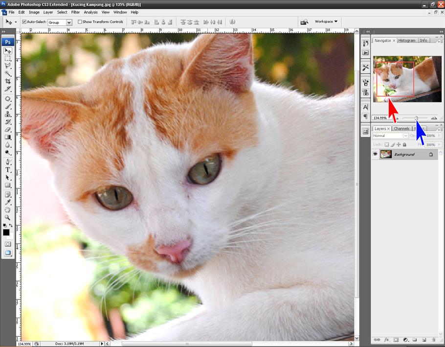 Cara Memperbesar Tampilan Foto dalam Photoshop