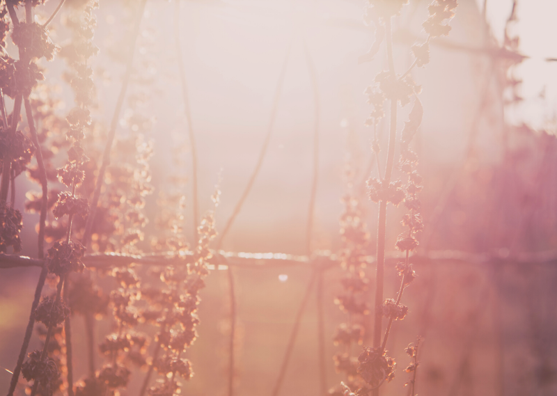 Hazy flowers in a post about 10 things you can do to fix a bad day.