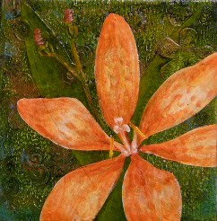 blackberry lily painting