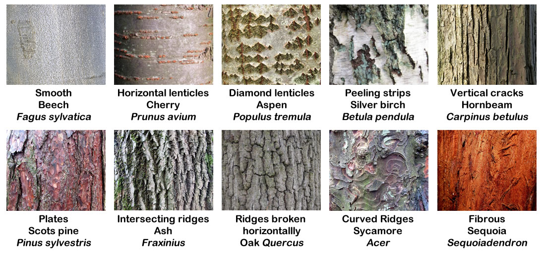 Absolutely Barking! Different Types Of Tree Bark