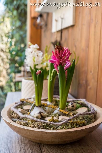 Zwiebelpflanzen in Wachshülle