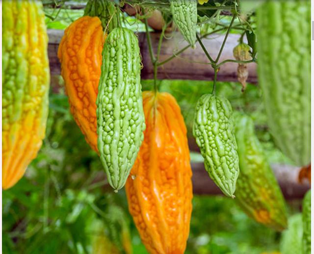 Bitter Melon & Cinnamon