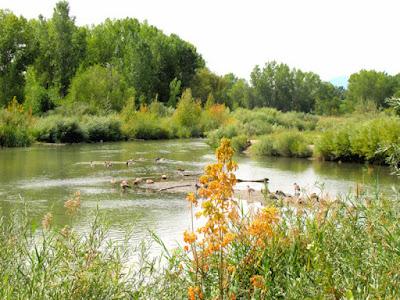 Jordan River Utah nature wetland Parkway