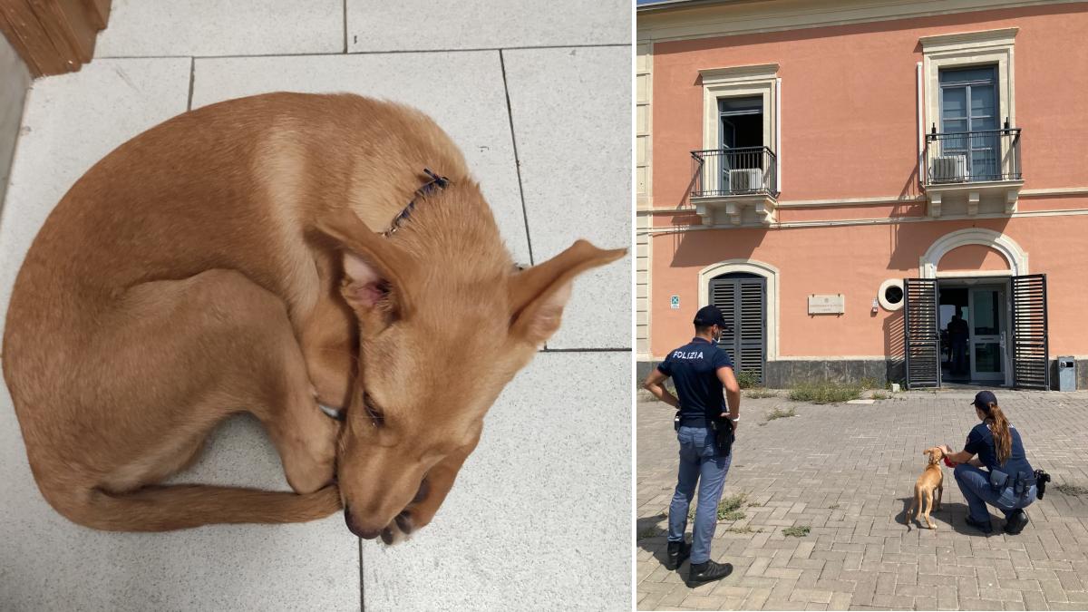 Cucciolo cagnolino scappato incendi Commissariato Librino