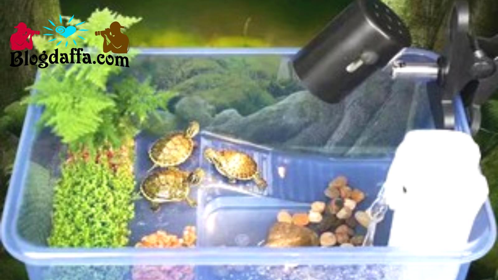 Cara merawat kura-kura dengan menyiapkan kandang yang sesuai