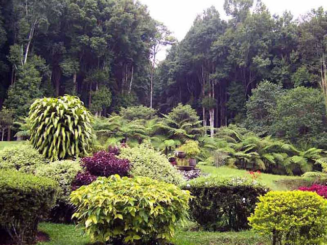 Kebun Raya Eka Karya adalah Tempat Romantis di Bali