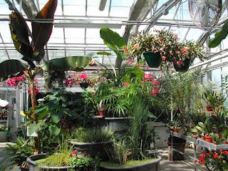 Télikert és gyógynövények