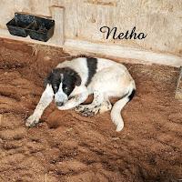 Netho