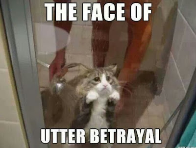 cat betrayal, cat shower, bathing a cat, cat funny, cat meme, cat jokes, funny cat pictures