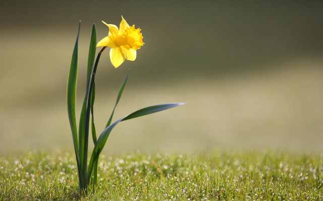 Windows 8 Yellow Flower Wallpapers