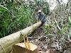 Nhiều dự án 'xẻ thịt' đất rừng trái phép tại Phú Yên