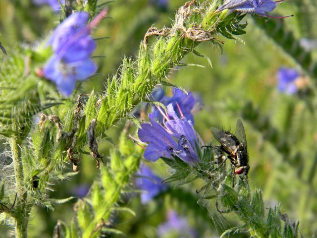 owady, kwiaty łąkowe, przyroda łąk