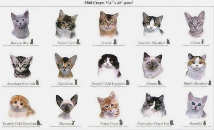 5 Cara Merawat Kucing Anggora