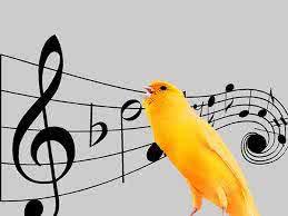 cara memasterkan burung kenari yang baik