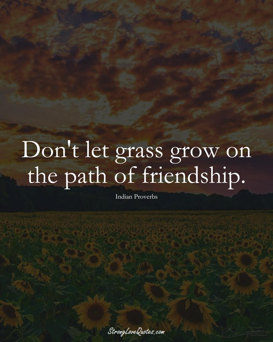 Don't let grass grow on the path of friendship. (Indian Sayings);  #AsianSayings
