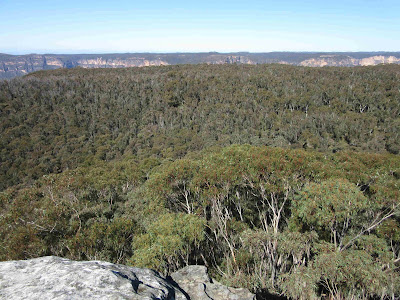 Bosque de eucalipto desde Anvil Rock. Blue Mountains. Sydney
